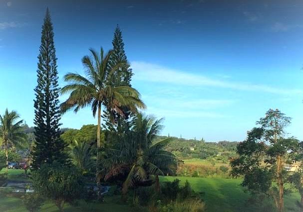 Maui Water Lily Farm