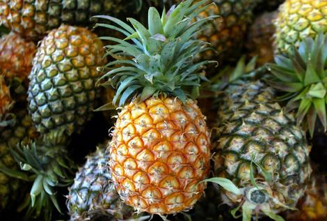 Haliimaile Pineapple Co Ltd