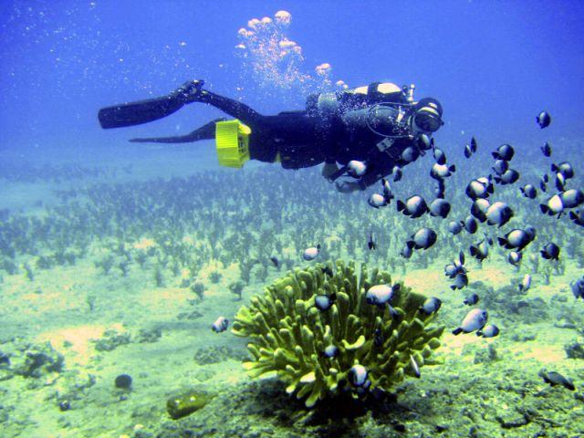 Scuba Luv Maui