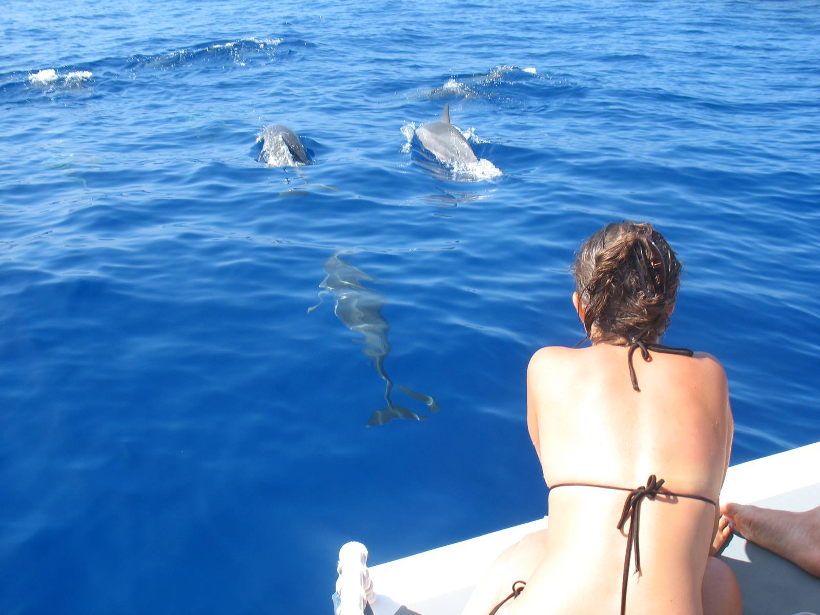 Hawaii Island & Ocean Tours