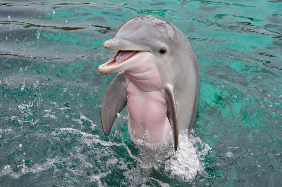 Dolphin Quest Oahu – Swim with Dolphins