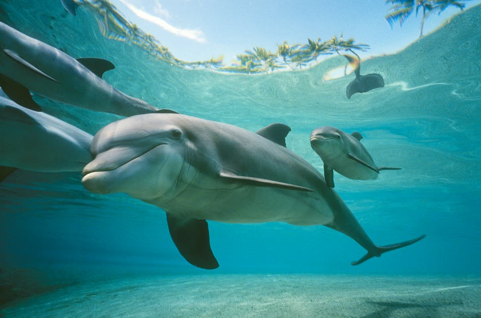 Dolphin Quest Hawaii – Swim with Dolphins