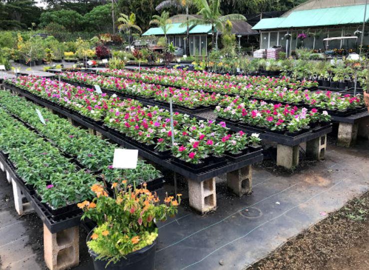 Kauai Nursery & Landscaping Inc