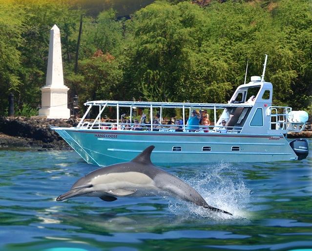 Iruka Hawaii Experiences Oahu Dolphin & Turtle Tours