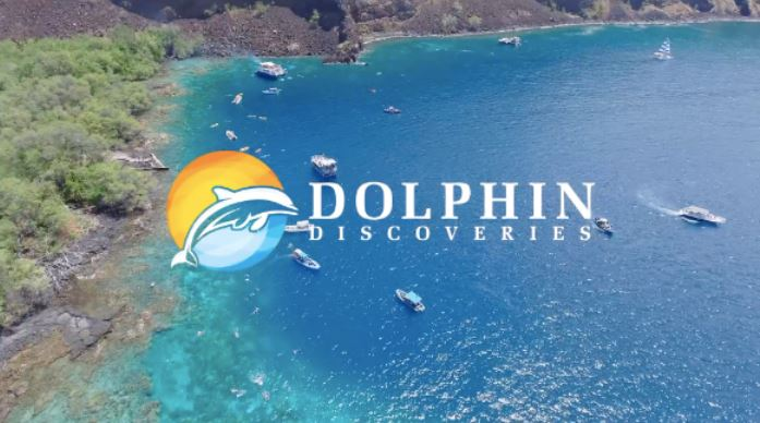 Dolphin Discoveries