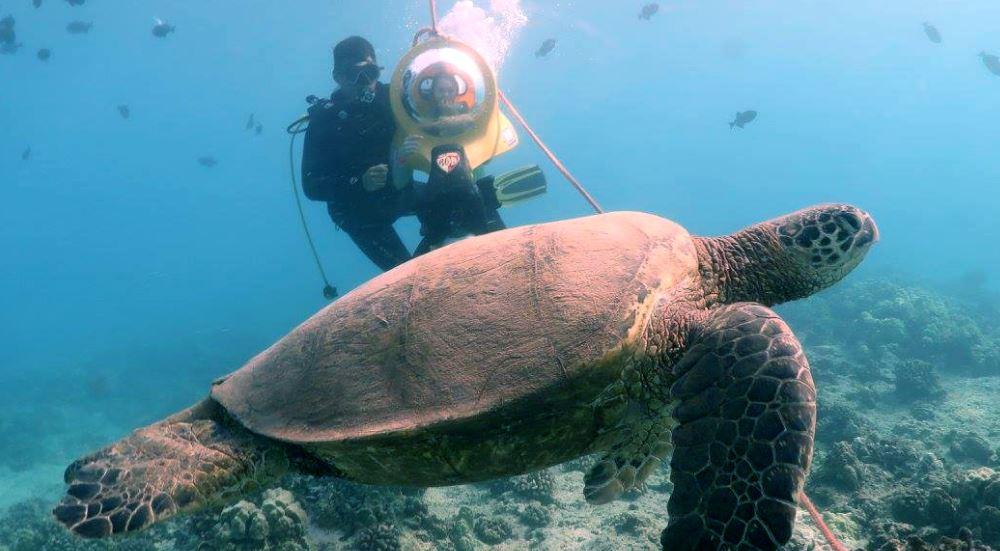 E Sea Diver / Go Dive Waikiki