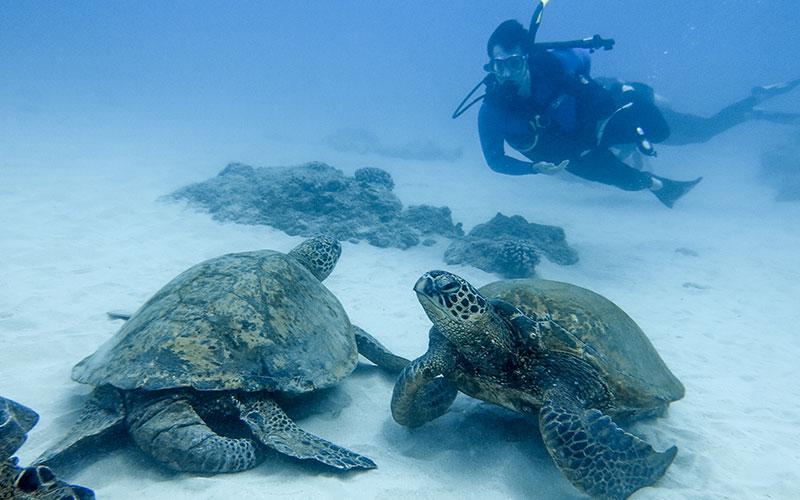 Aqua Zone Scuba Diving & Snorkeling